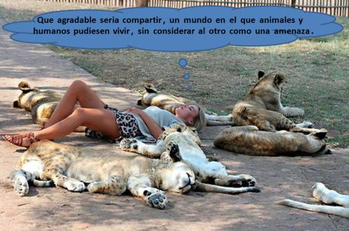 Animales y humanos